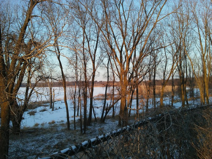 Lake and trees and a chain link fence in winter