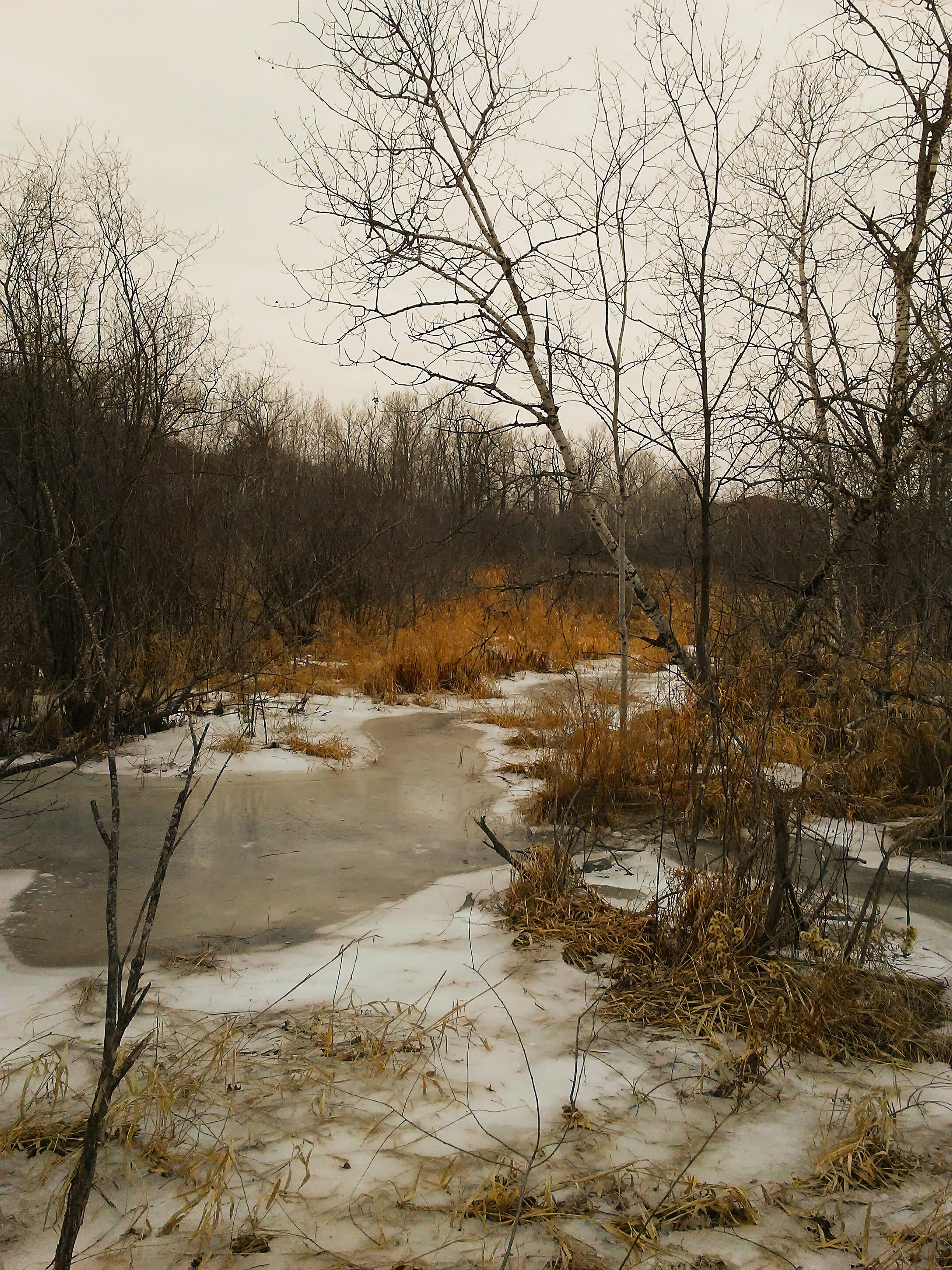 Birch and a stream and golden long grasses