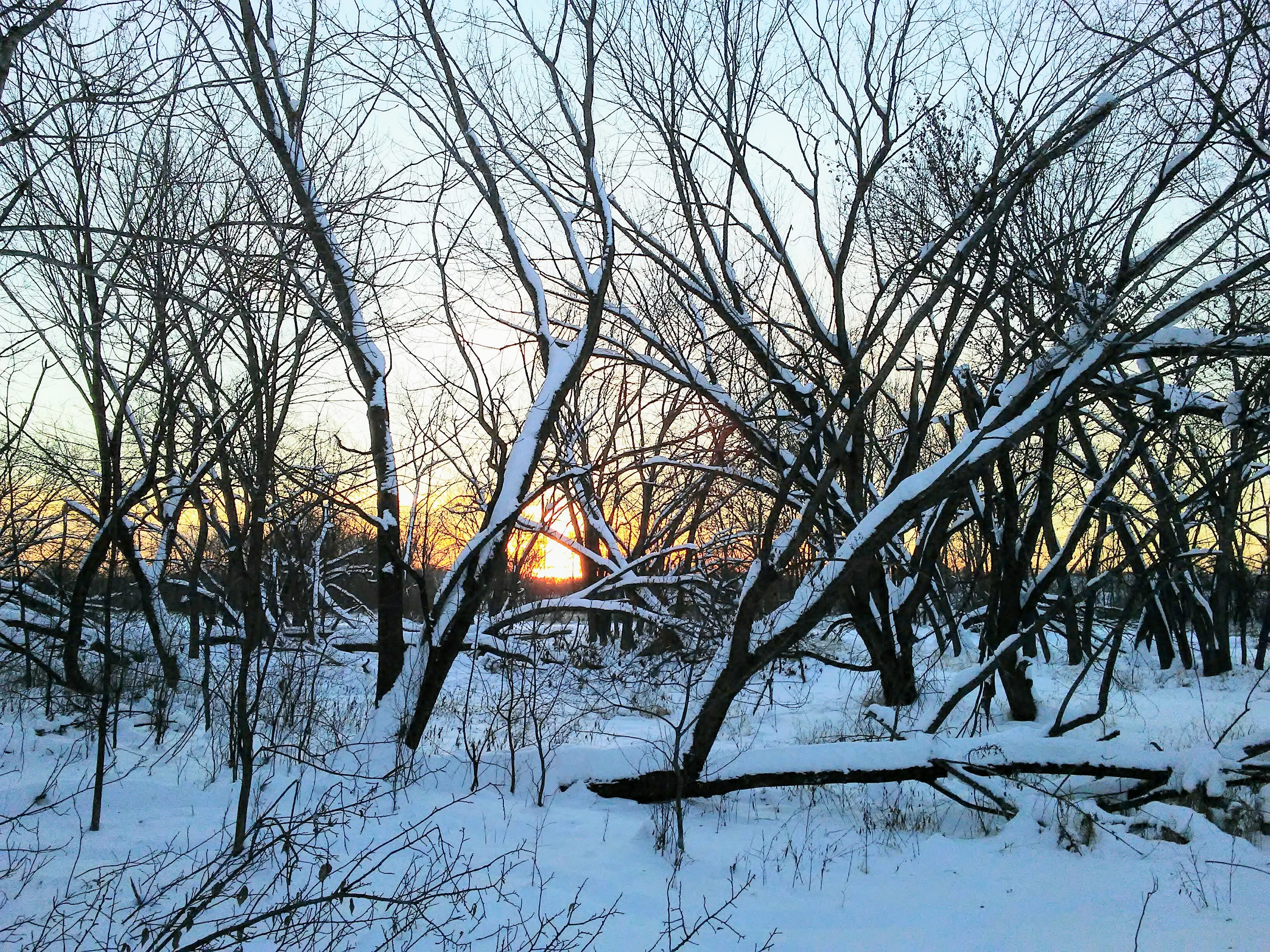 sunset, snow, trees