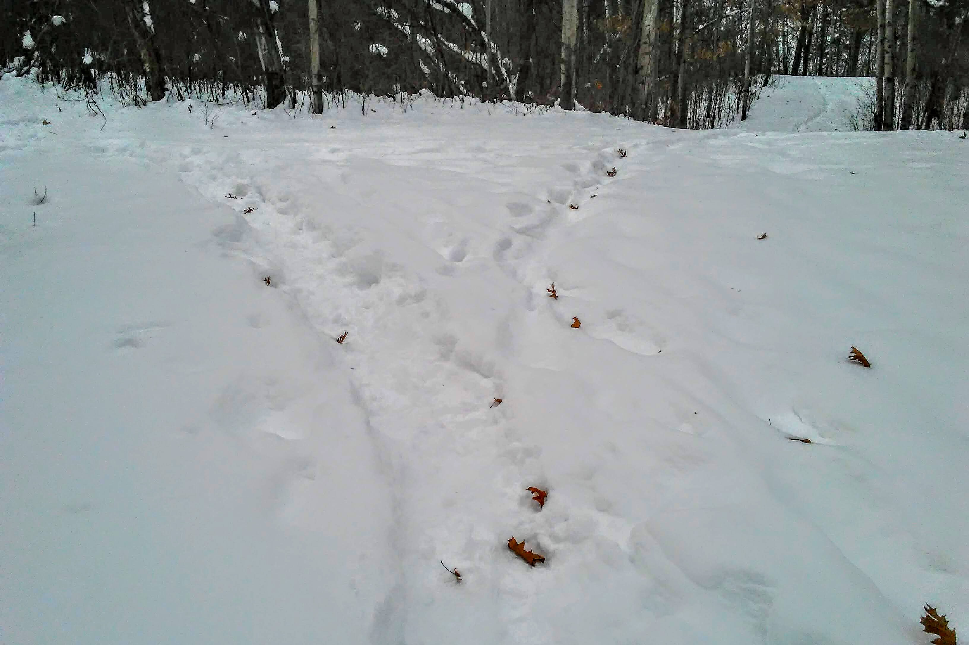 photo of a snowy path