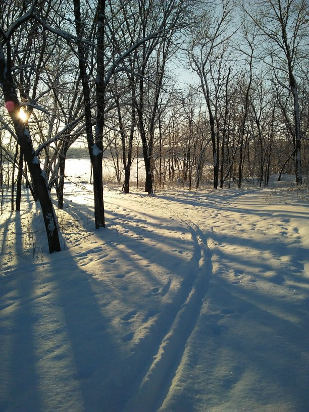 cross country ski tracks and sunrise behind snow covered trees