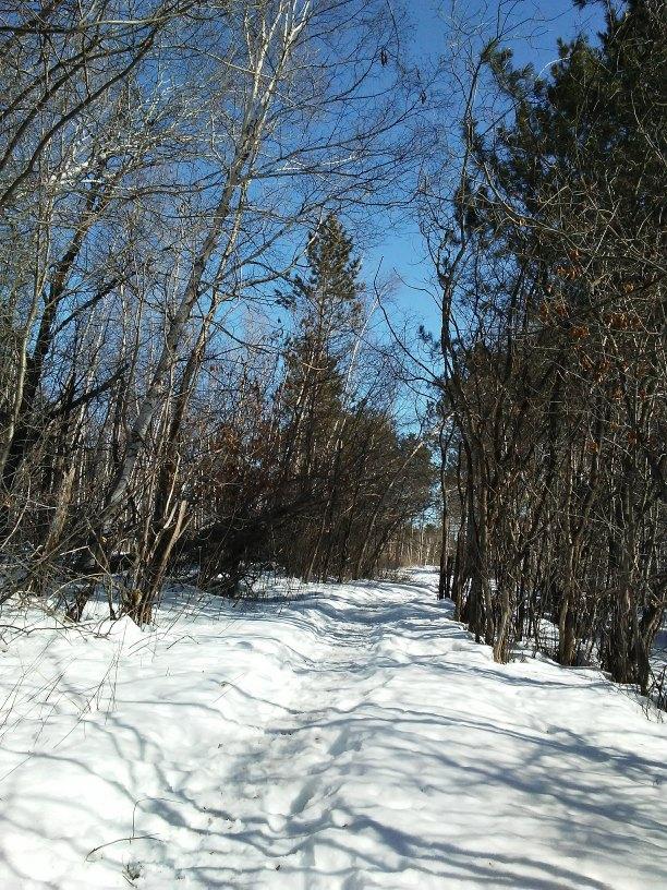 Walking path in snow through woods