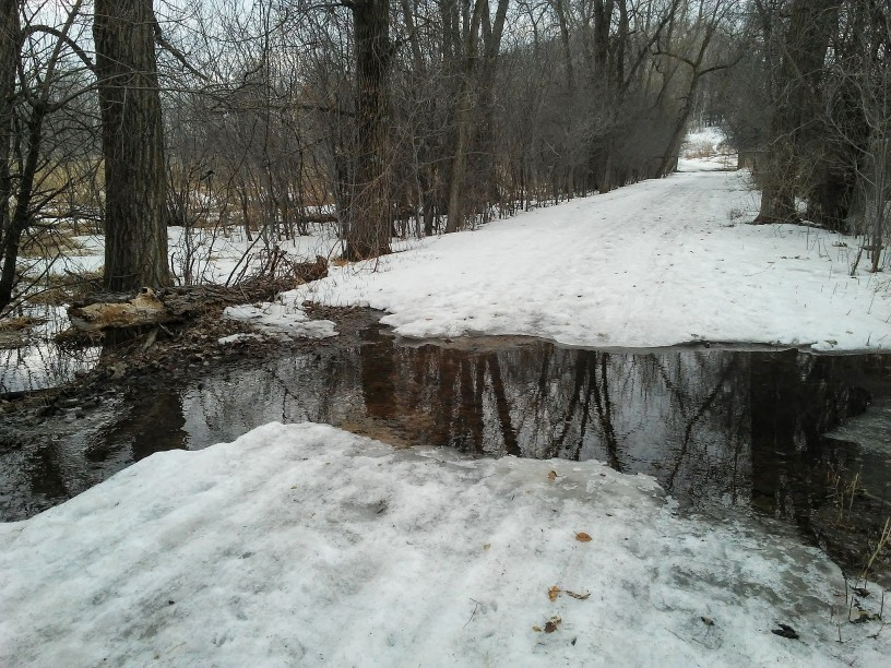 water flowing across a snow covered and tree lined trail