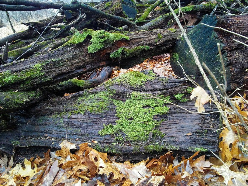 logs and moss and leaves
