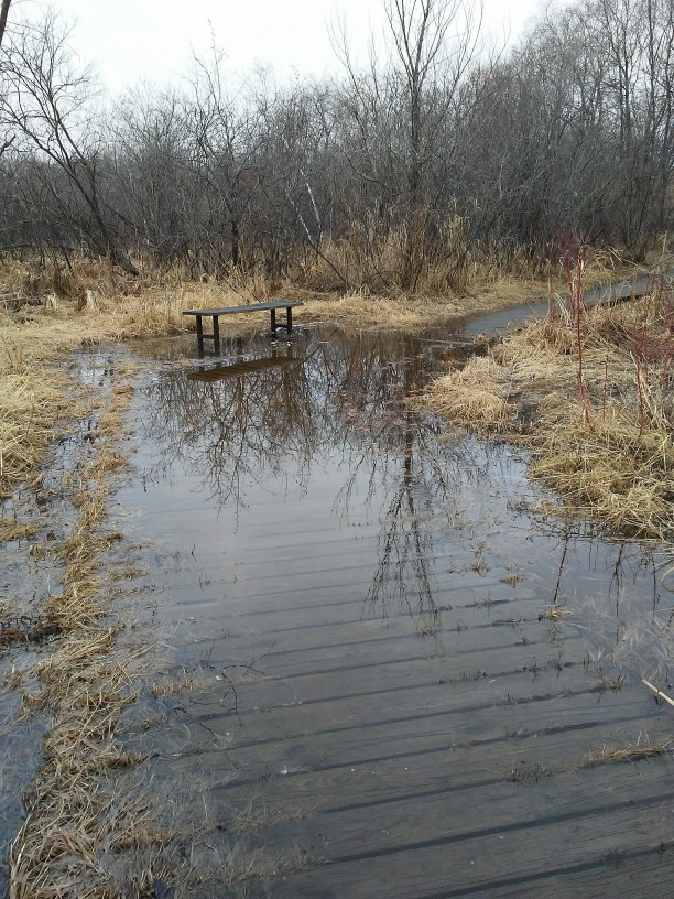 a bench and a boardwalk that is partly underwater. trees in background
