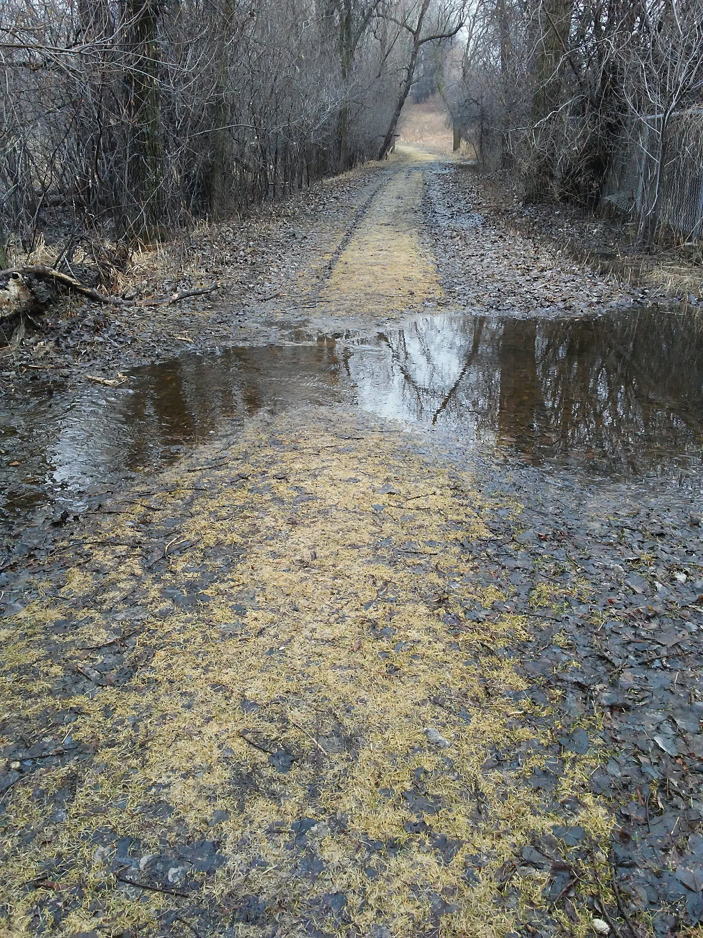 water going across a tree lined path in early spring. All is gray and tan and brown