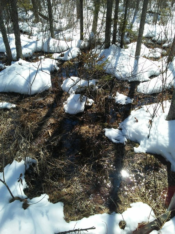 Melting snow in the woods