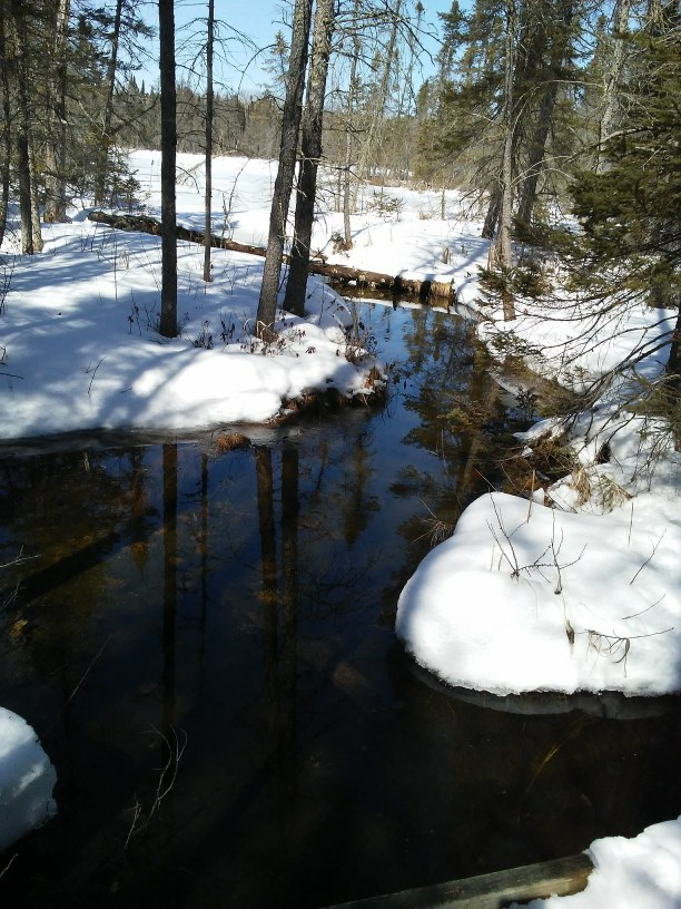 Water and snow and trees