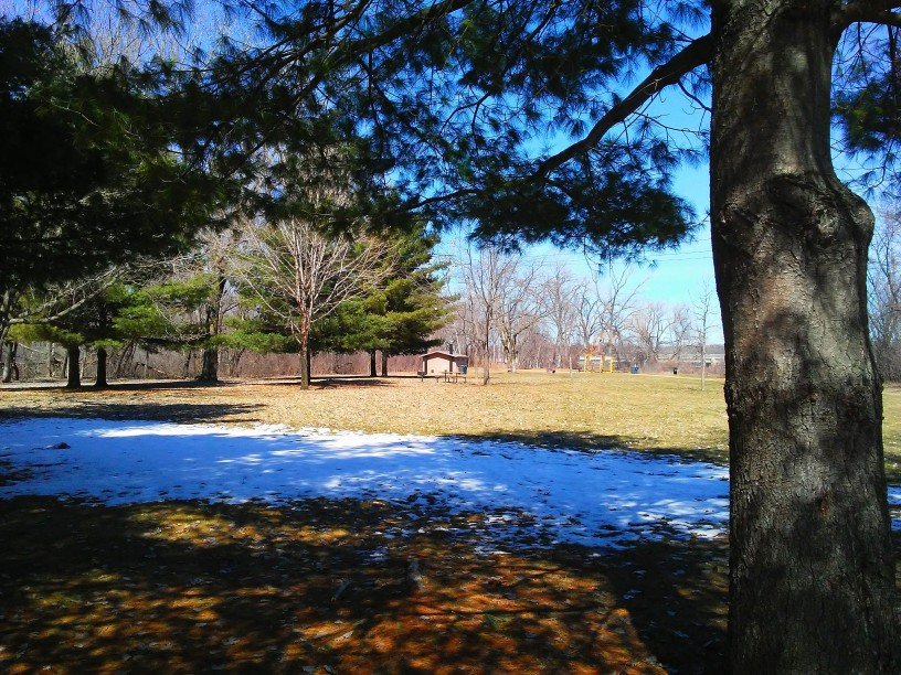 tree in foreground, a patch of snow on the ground