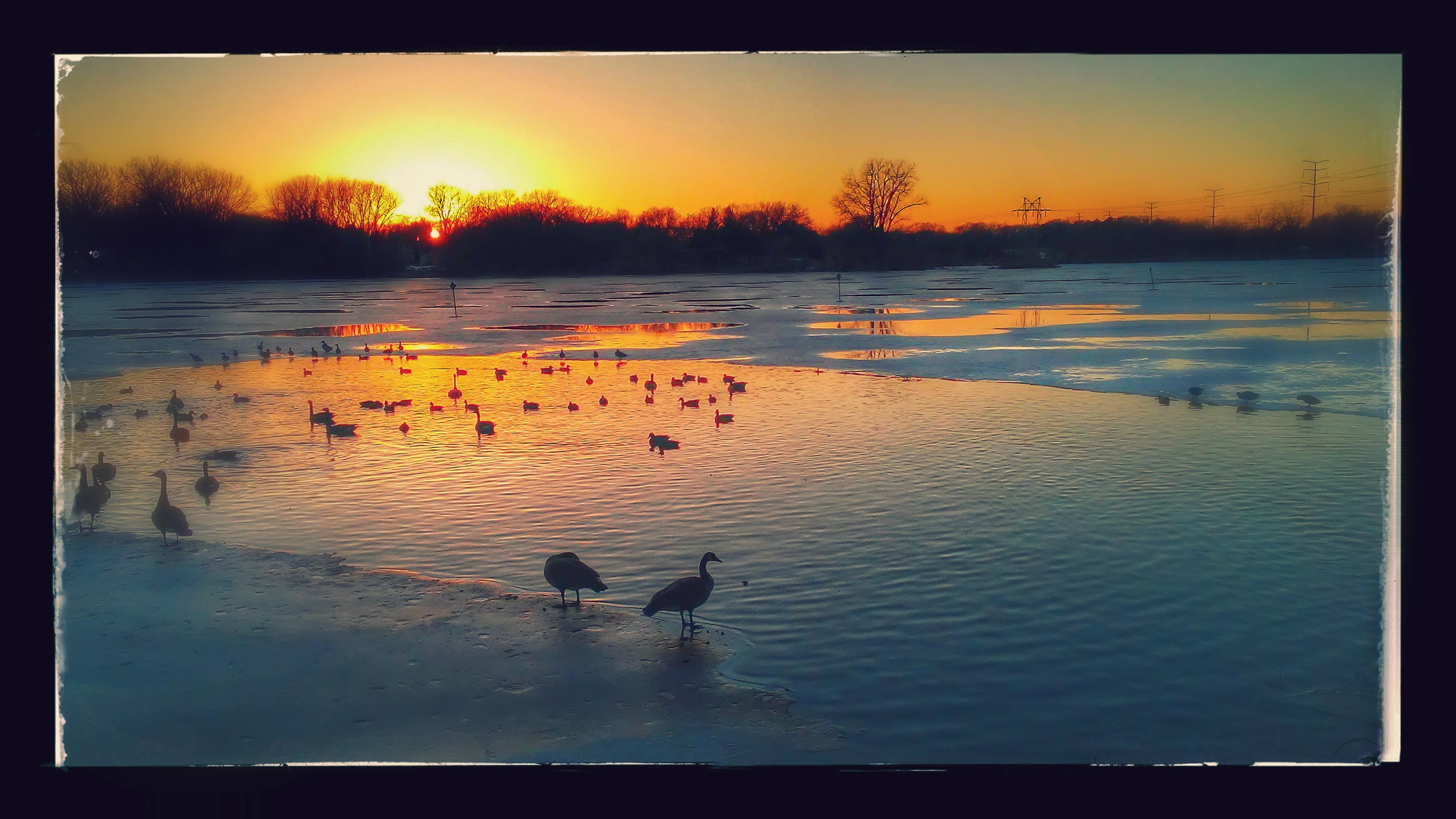 sunset on a lake with partial ice and geese