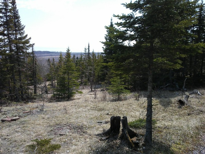 A meadow with trees and an old stump and a view of distant trees.