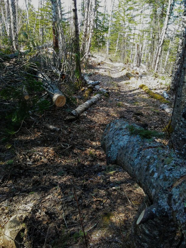 A tree that fell across a trail has been cut to allow hiking traffic to proceed.