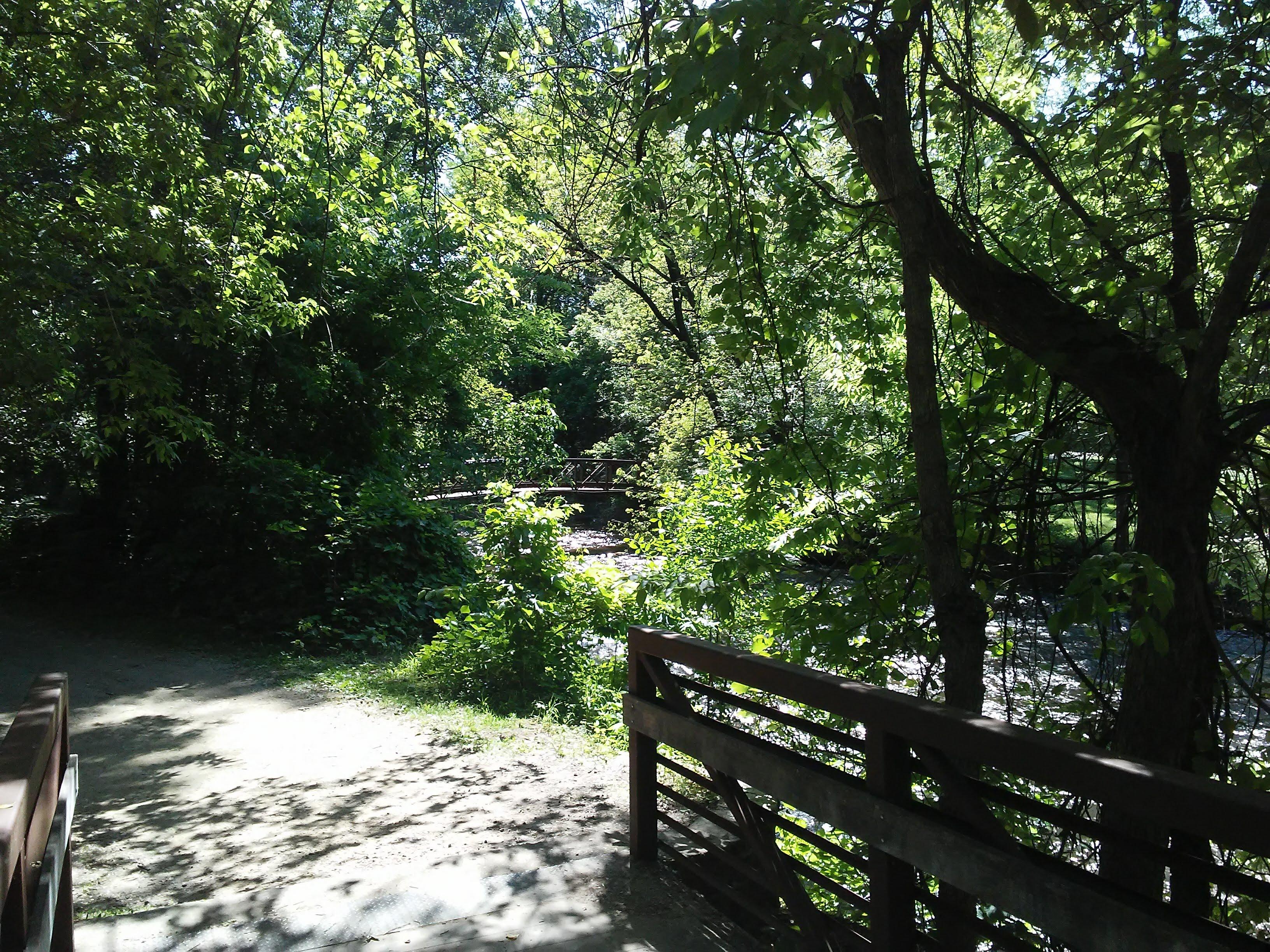 trees, stream, and bridges