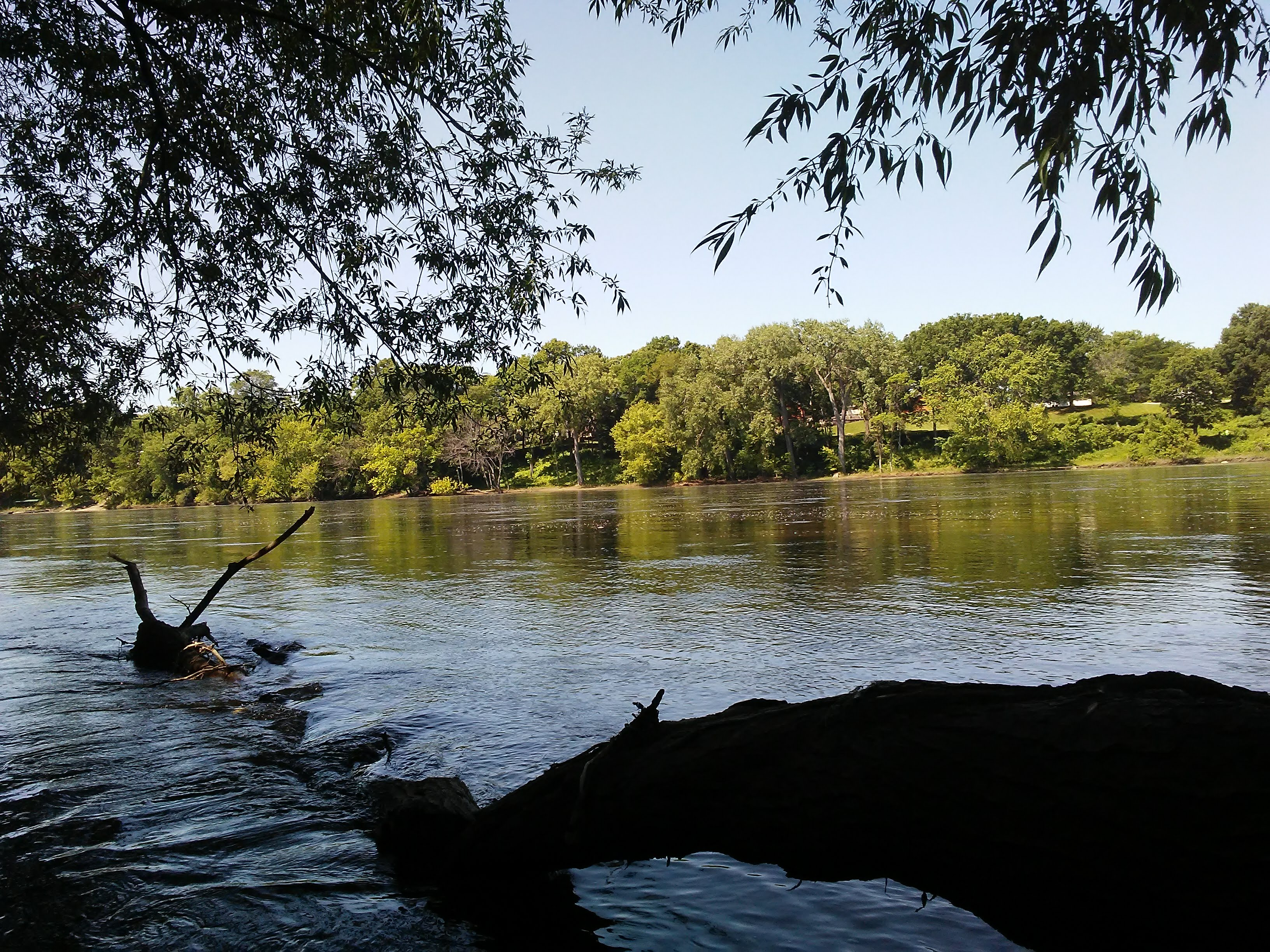 fallen tree in a river