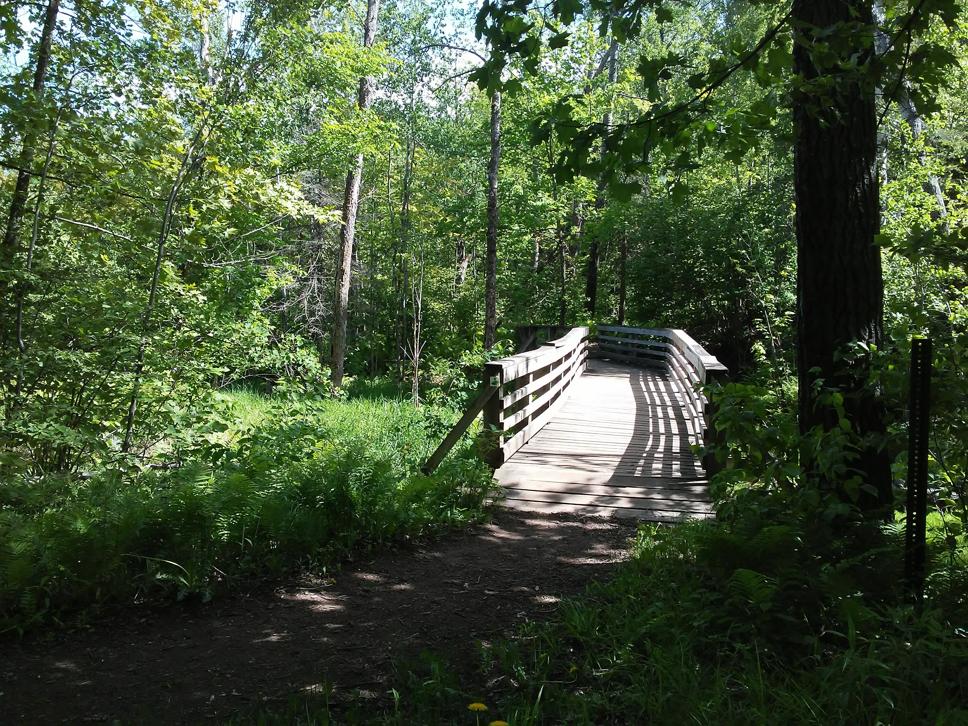 Wood bridge over a stream in Bagley Nature Area, Duluth