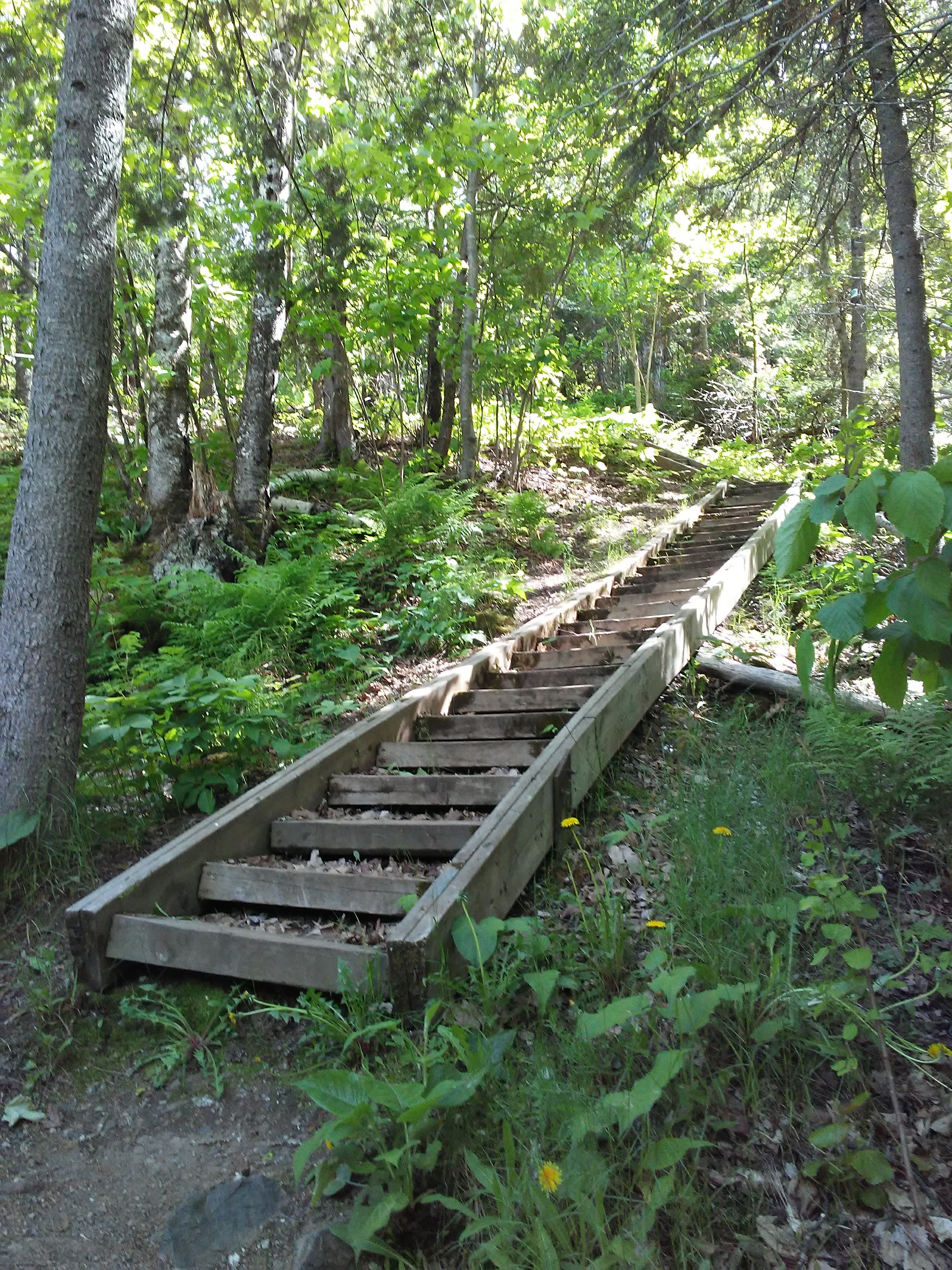 wood steps in the woods
