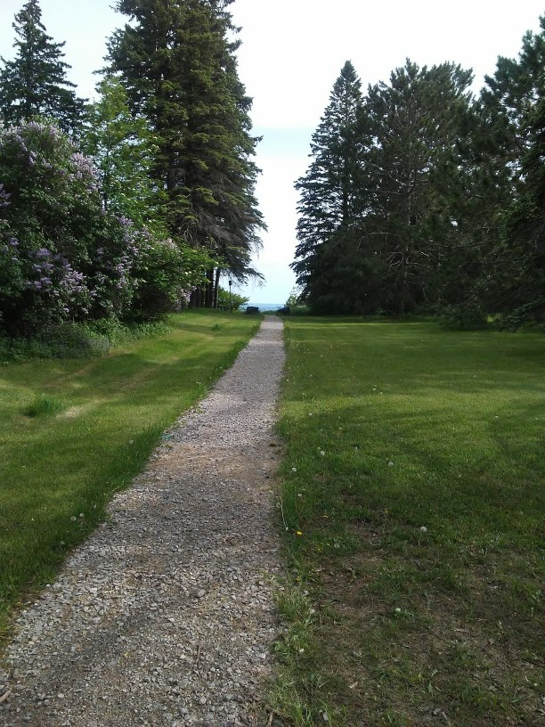Rock path through a mowed lawn with a lilac bush and pine trees.