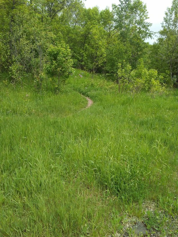 Dirt path through tall grass up a hill