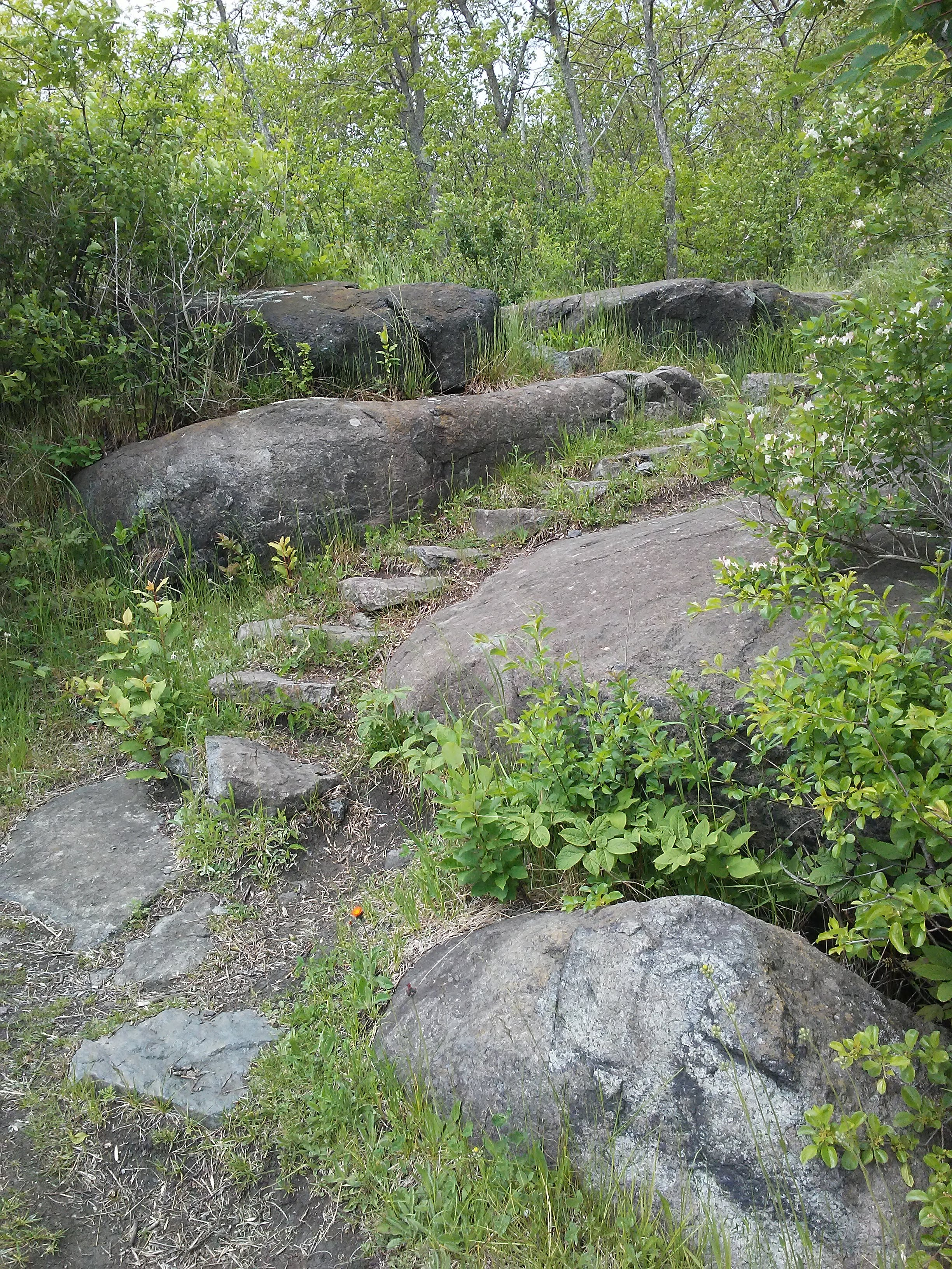 trail of rock steps overgrown with plants and surrounded by large boulders
