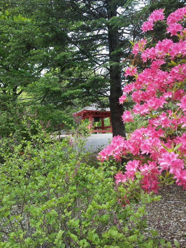 Japanese garden with a view of the Peace Bell in Enger Park Duluth, Minnesota