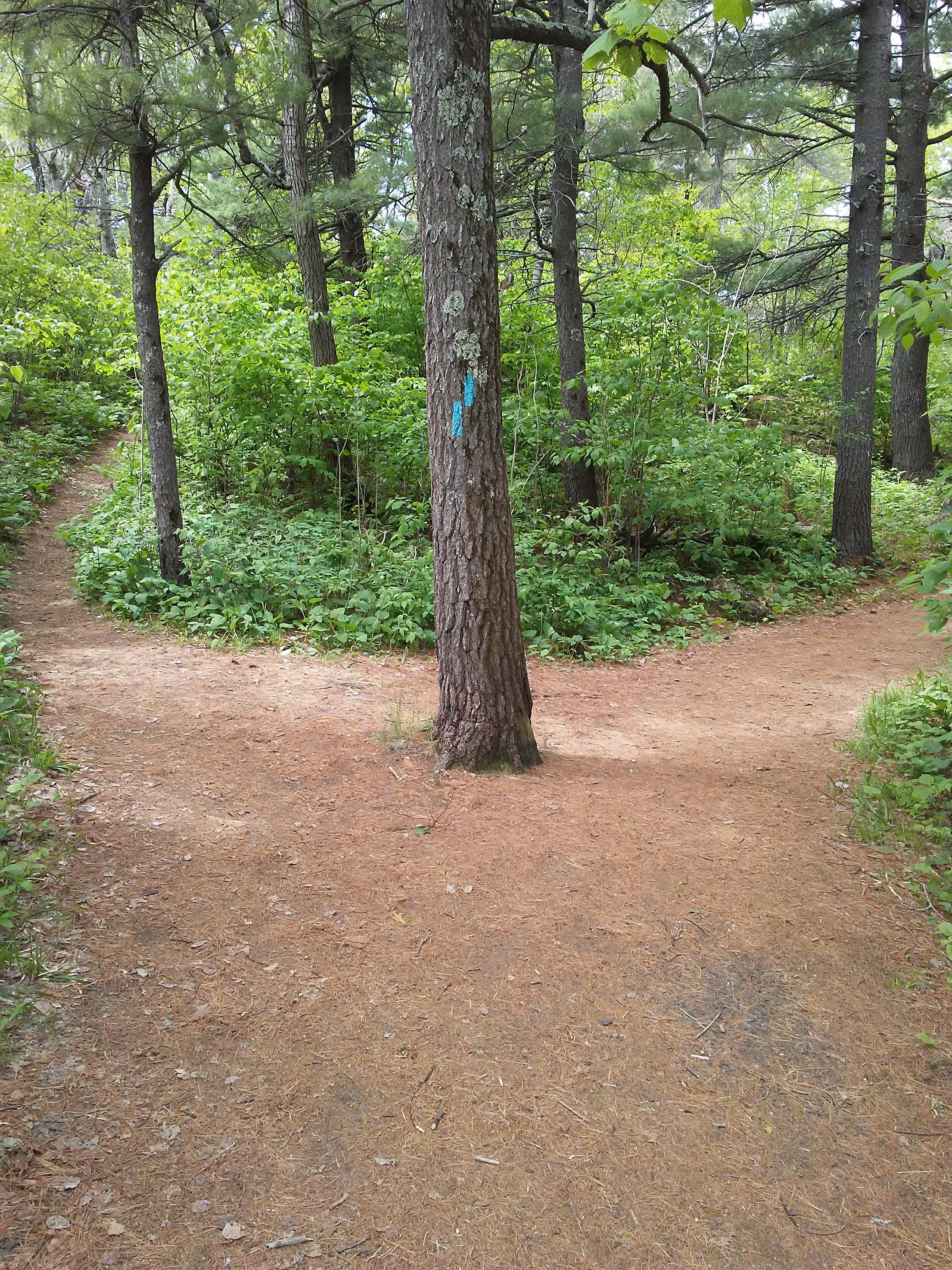 dirt path and a tree with two blue blazes at the fork in the path