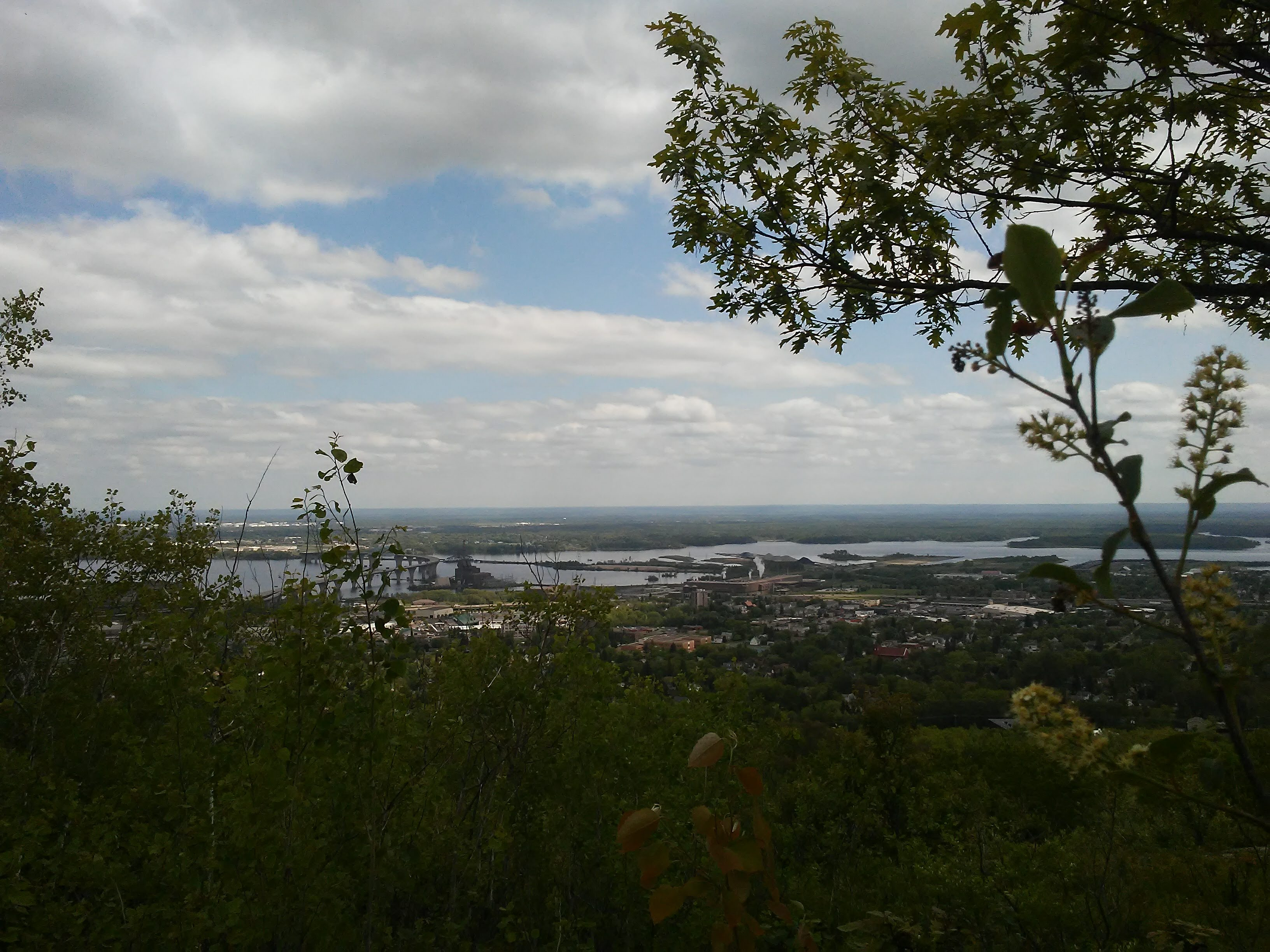 view of Duluth/Superior harbor with plants in the foreground