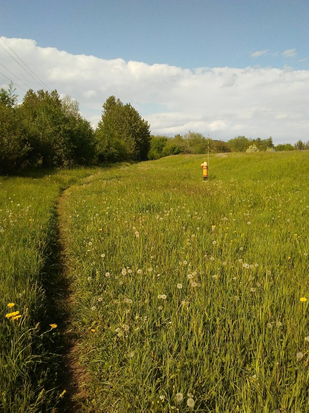 dirt path through long grass and a yellow fire hydrant