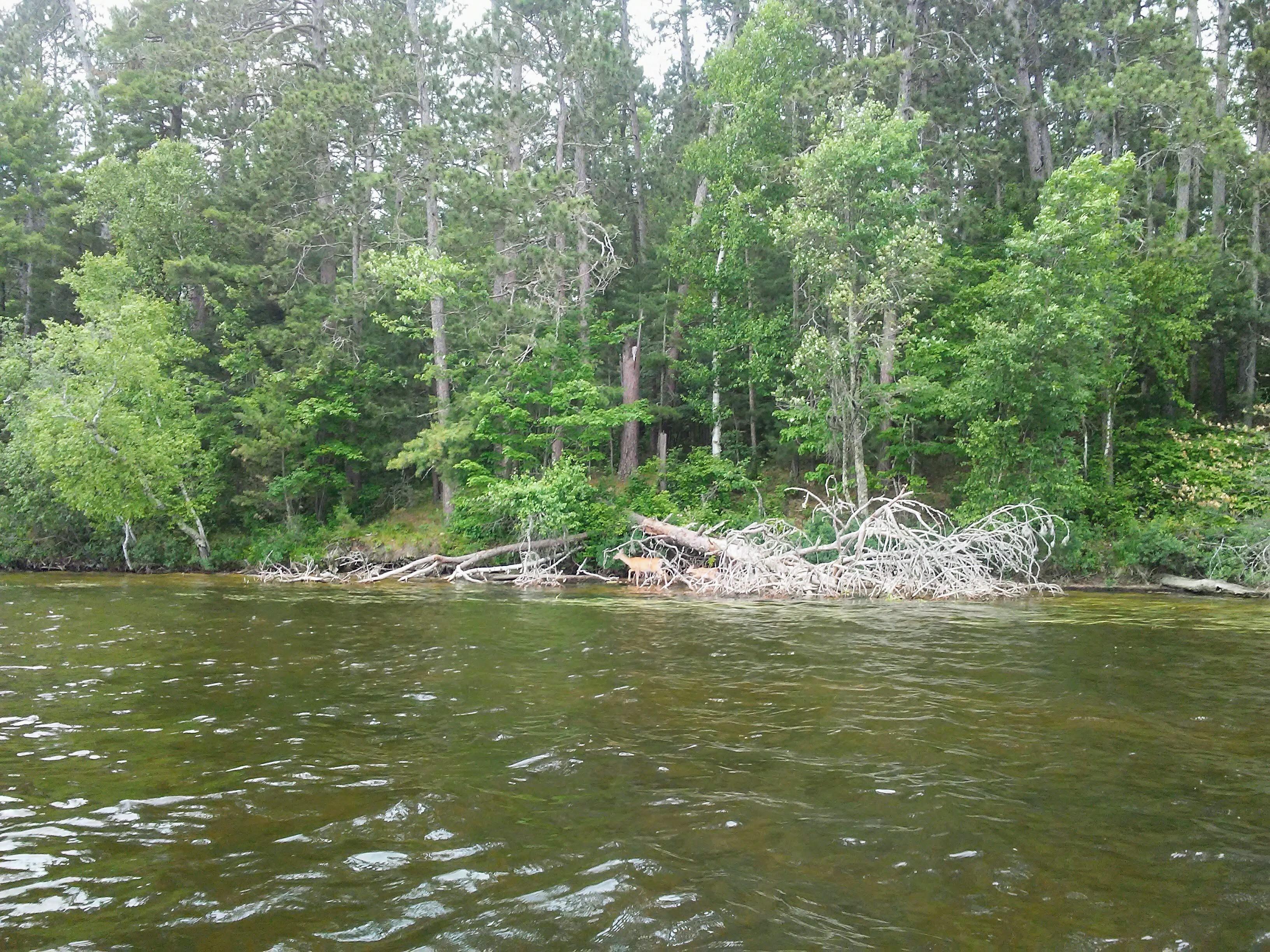 water, trees, two deer