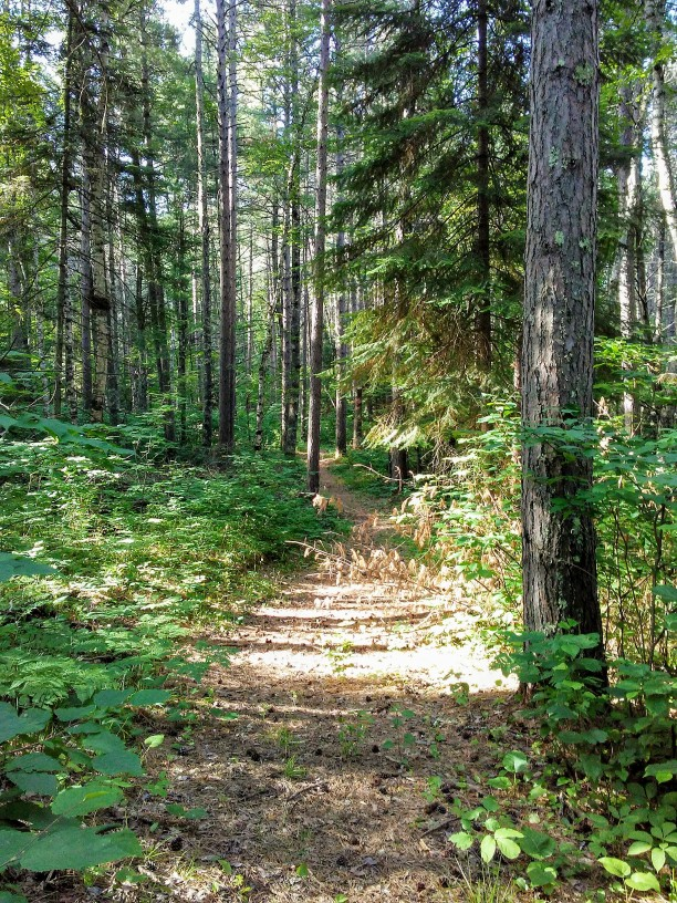 sunny path in the woods.