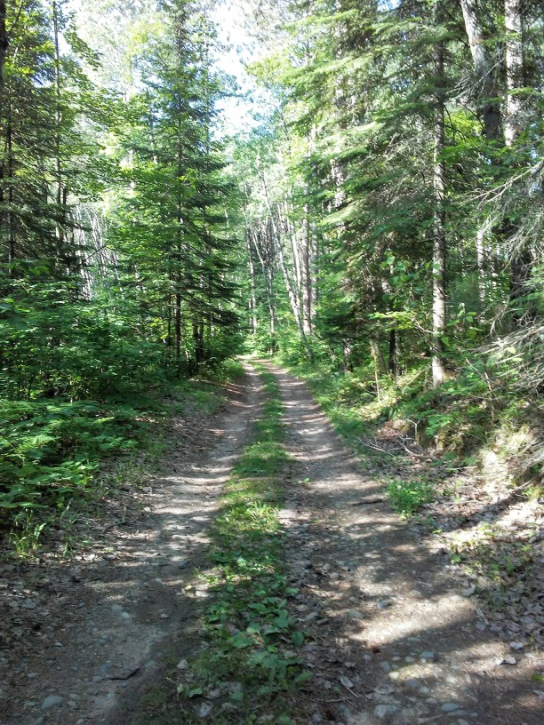 two ruts in the woods that make a road