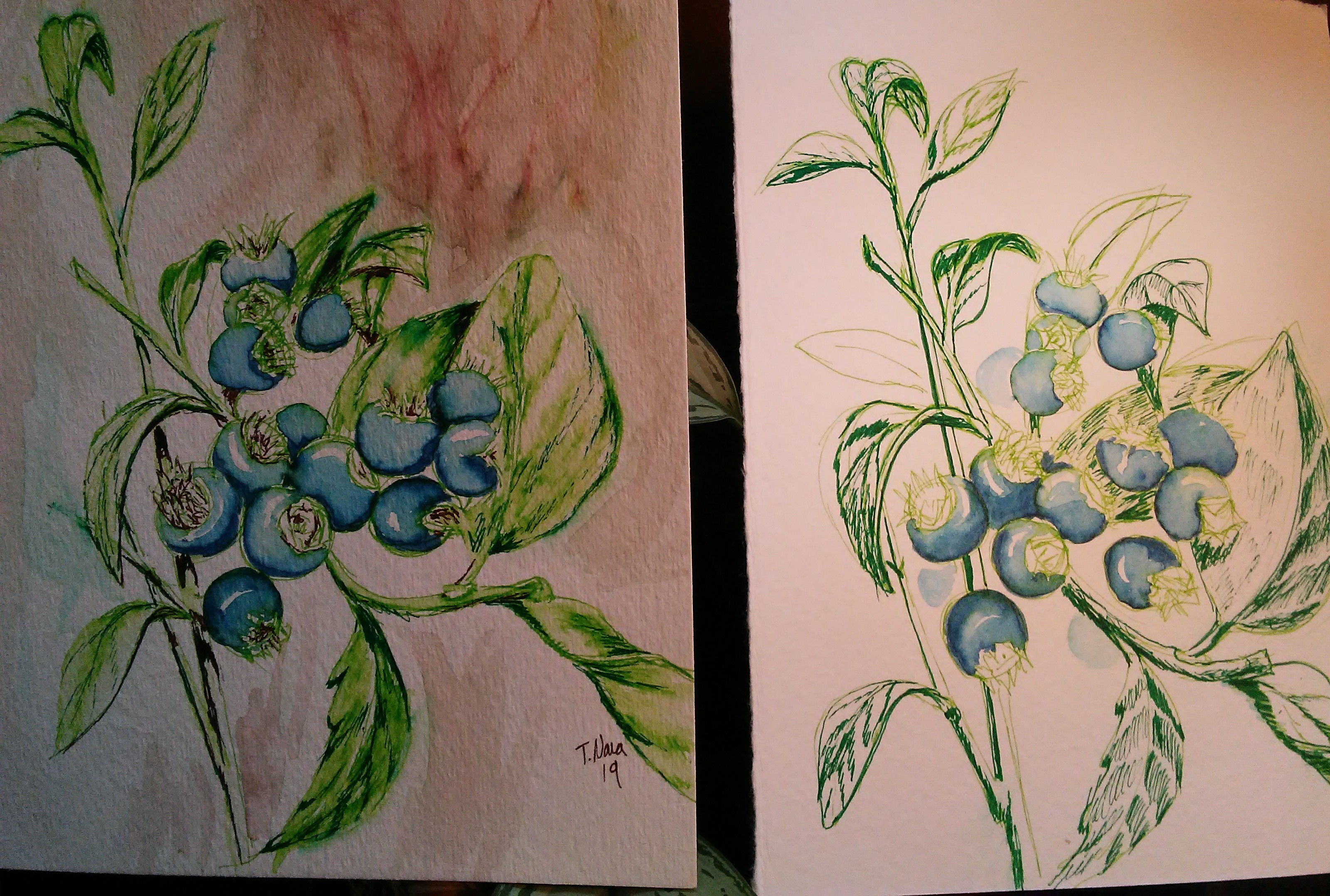 two watercolor sketches of blueberry plants.