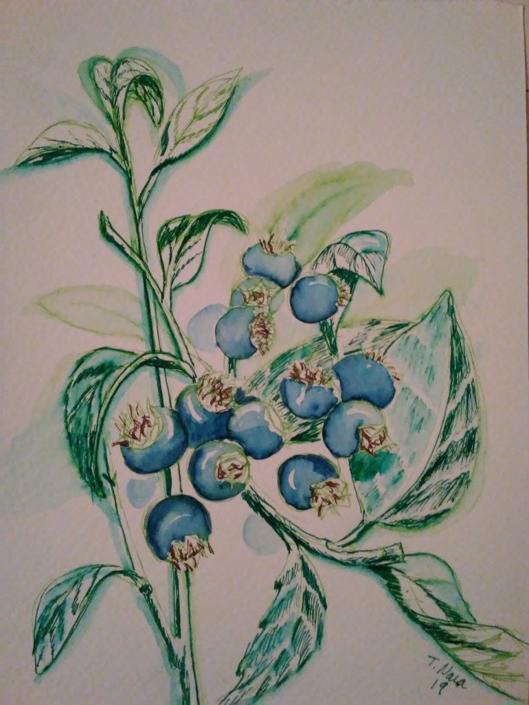 Drawing of blueberries