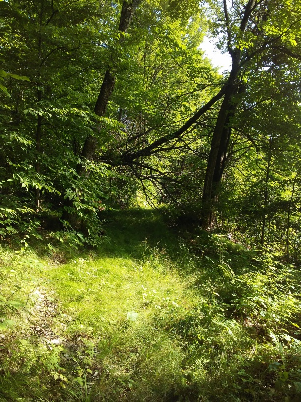 grassy path and a fallen tree