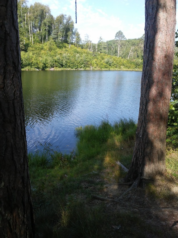 view of a lake between two tree trunks.