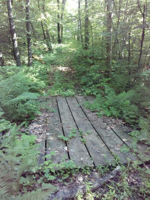 wooden platform bridge in the woods