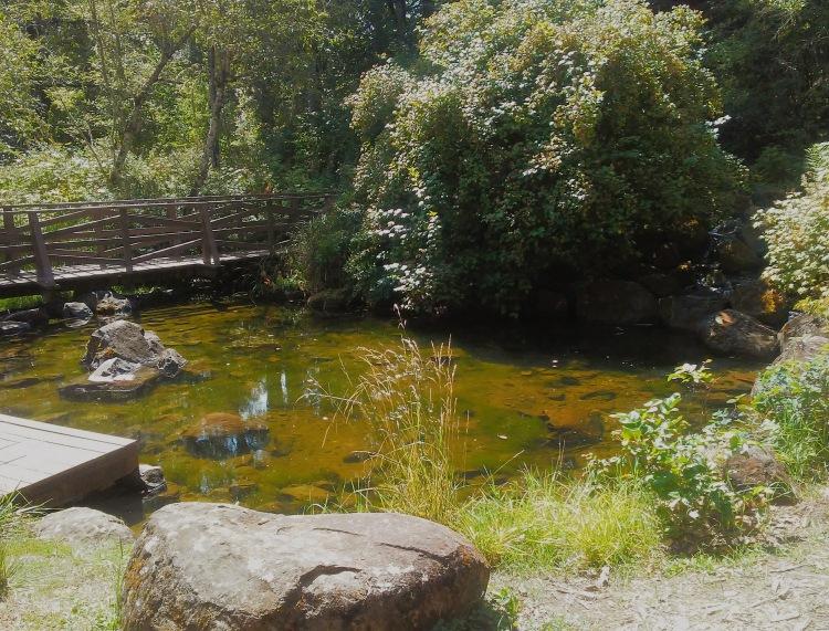 water, bridge, trees, rock