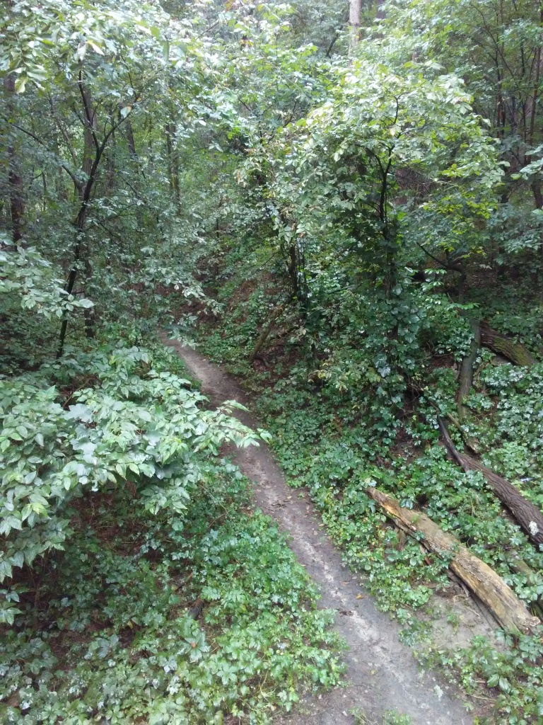 dirt trail in the woods viewed from above