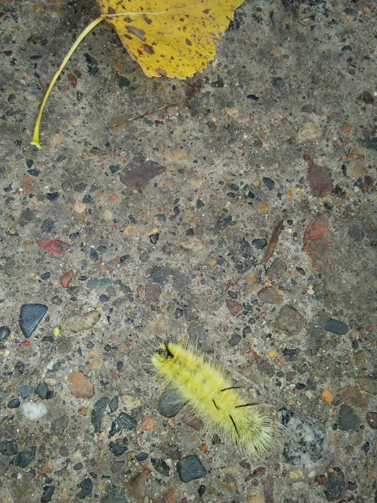 yellow catepillar and a leaf