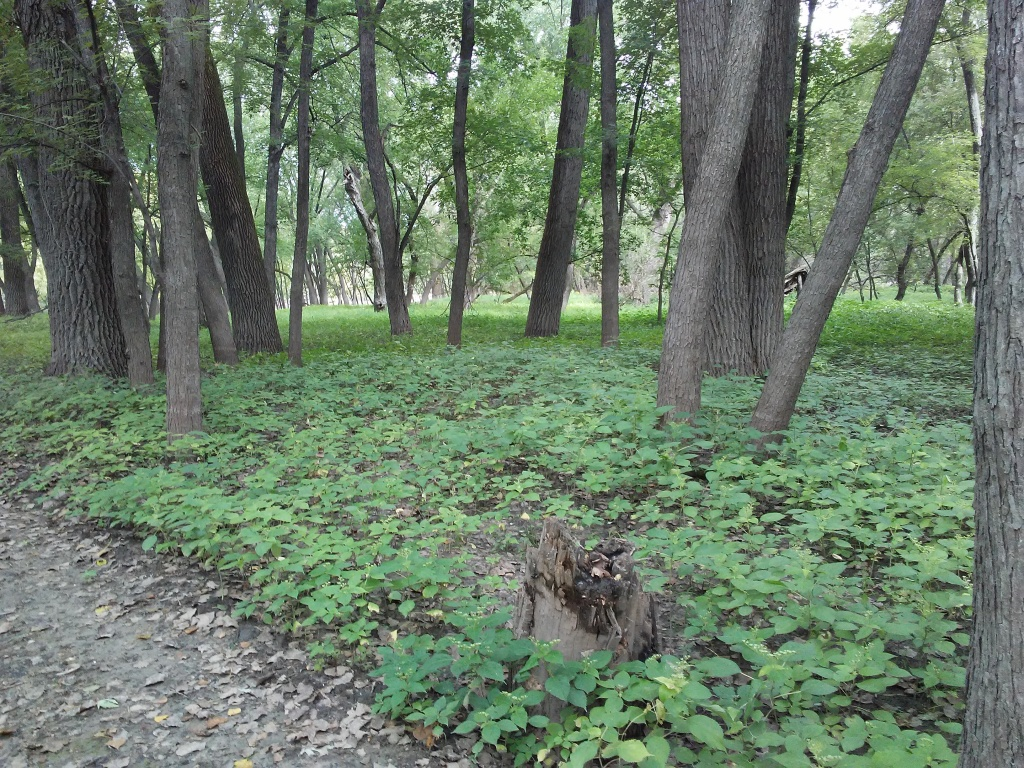 trees in a flat green area