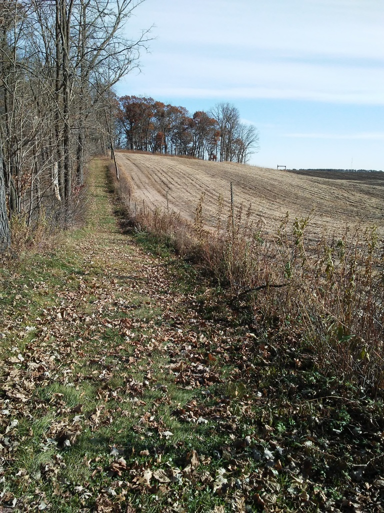 grass trail with farm fields on one side and the forest on the other.