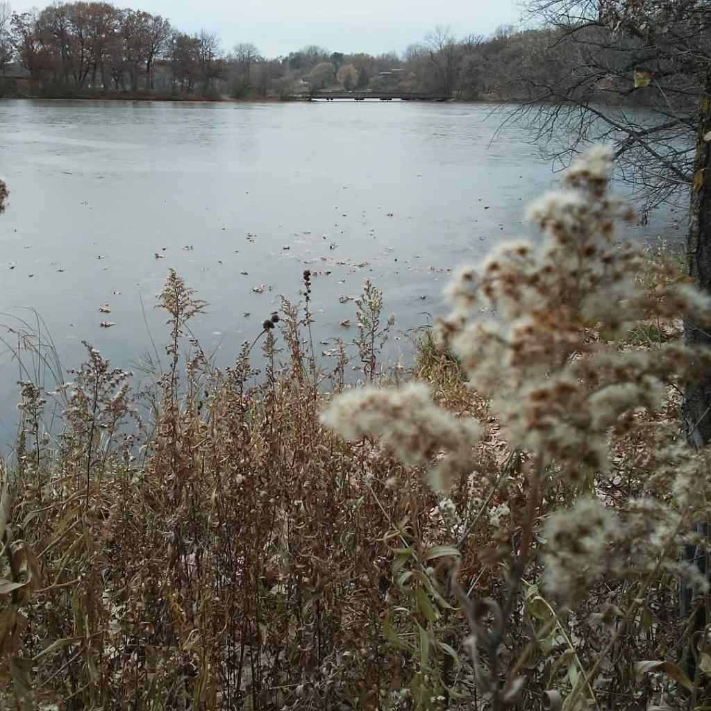 ice and weeds and a lake