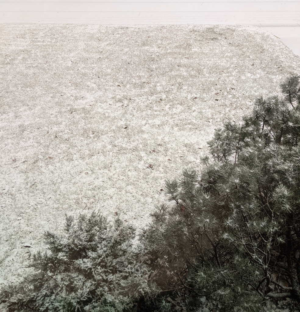 light snow on a mowed lawn and shrub